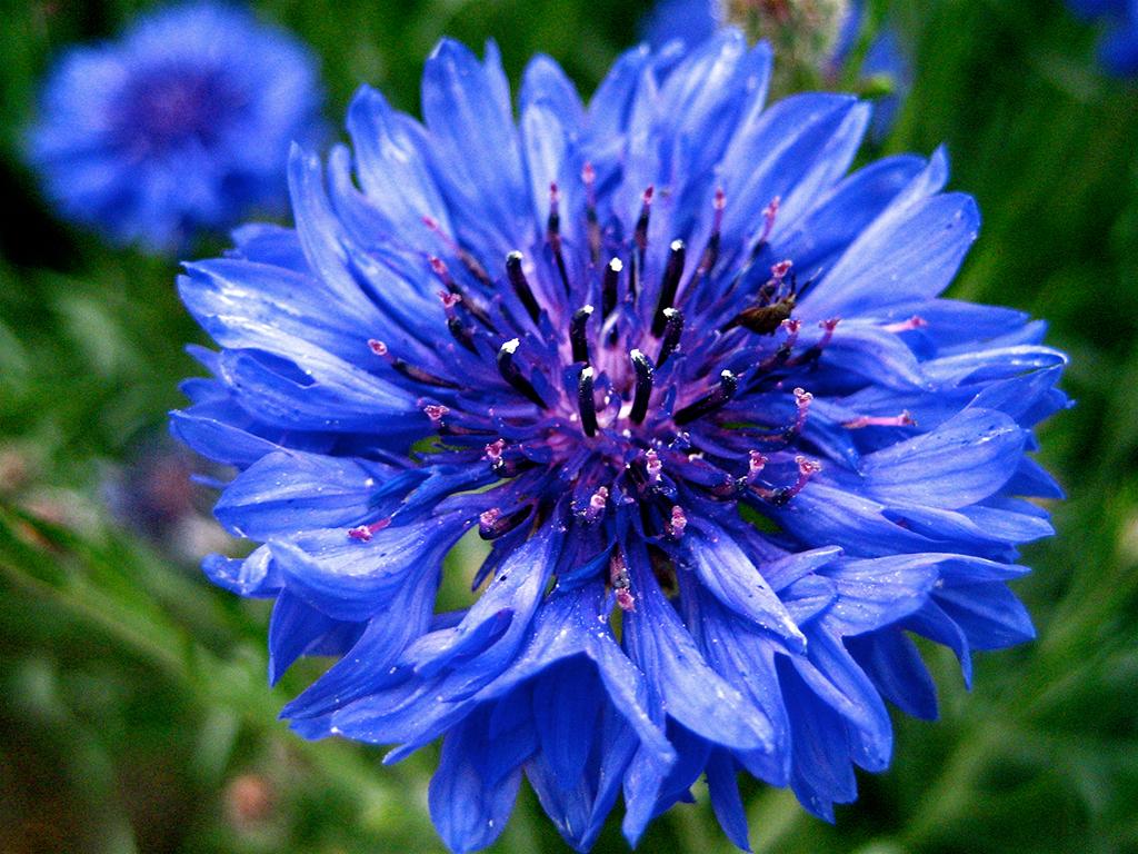 Boutonniere_flower
