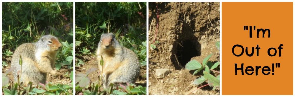 Squirrel-Collage1